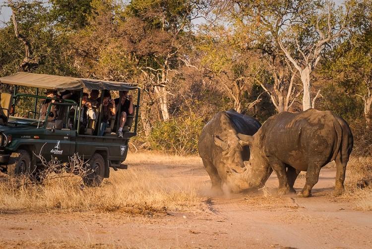 Makro safari