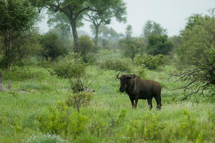 Kruger park poleti